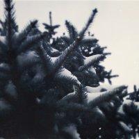 Зима :: Кристина Кеннетт