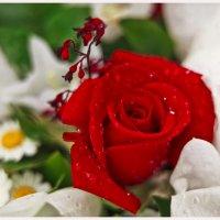 Роза :: Andrei J