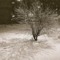 Ледяной дождик :: Kate Sparrow