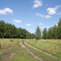 Дорога к лесу :: Андрей Трухачев