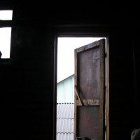 осень.крыша.старый кот. :: лариса пивоварова