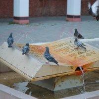 Птитцы :: Людмила Тарасова