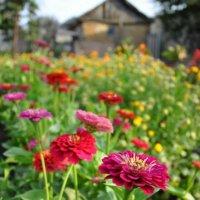 разноцветье :: Юлия Годовникова