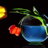 Два тюльпана :: Владимир Новиков