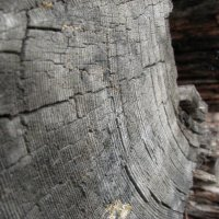 Годичные кольца неизвестного дерева :: Екатерина С.