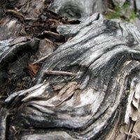 Кора старого дерева :: Екатерина С.