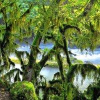 Самшитовый лес :: Владимир Зыбин