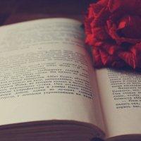 book :: Настя Васильева