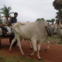 Камбоджа.Селяне. :: Лариса Борисова