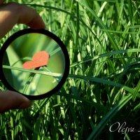 Ищи и найдешь :: Олеся Кечина