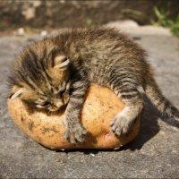 Моя картошка :: Ростислав Охтень