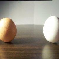 Eggs :: Семен Насекин