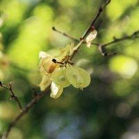 Весна идет :: Михаил Васильев