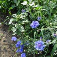 Flower1 :: Ирина Матвеева