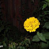 Flower3 :: Ирина Матвеева