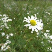 Flower5 :: Ирина Матвеева