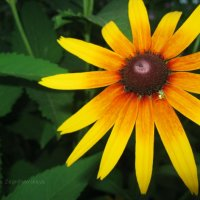 Цветок :: Алёна Загнитковская