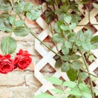 Romeo et Juliette :: Александра Кокоза