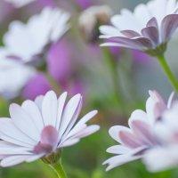 violet :: Александра Кокоза