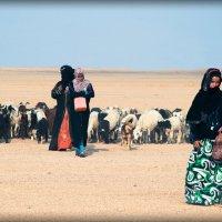 Где-то в пустыне :: Леся Сова