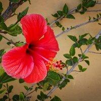 Просто цветок. :: Dim Krot