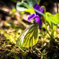 Дыхание весны :: Илья Сидоров