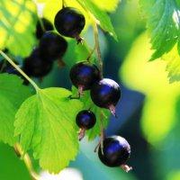 Летние витамины :: Владимир Буравкин
