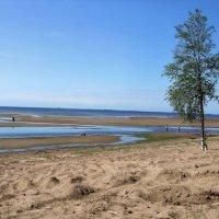 побережье Финского залива :: Алексей Кудрявцев