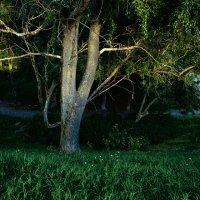 дерево :: Илья Покровский