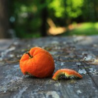 турецкий апельсин :: Надежда Антропова