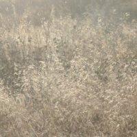 Берег озера Иртяш :: елена цыганова