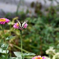 бабочка на цветах :: Павел Бахарев