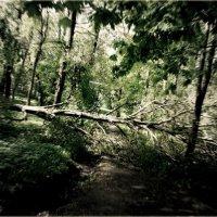 Темный лес :: Дина Назарова