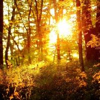 Закат в лесу :: Виолетта Орешкова