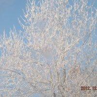 зима :: Эльвира Белялова