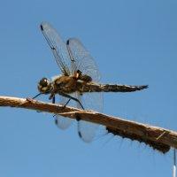 стрекоза и гусеница :: Лидия Юсупова