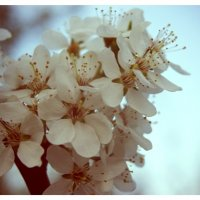 Цветы :: Света Кондрашова
