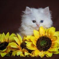 кот моисей :: Ольга Жутаева