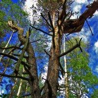 Мертвое дерево... :: Павел Зюзин