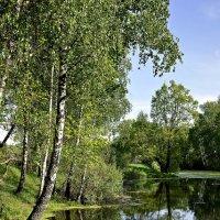 Подмосковный пейзаж :: Надежда Лаптева