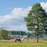 Ходят кони... :: Виктор Евстратов
