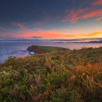 Остров Брюни :: Wattletree -