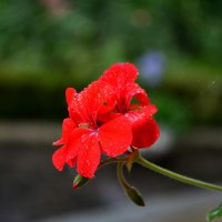 Цветок :: Александр Петряев