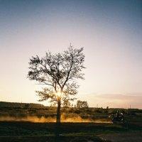 Дерево :: Алексей Галушко