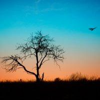В дикой жаркой Африке.... :: Владимир Ноздрачев