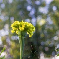 Цветок :: Валерий Молоток