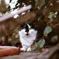 Вечерний котейка :: St. Rezkiy