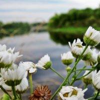полевые цветы и река :: Катя Кузьменко