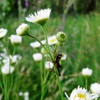 полевые цветы и кузнечик :: Катя Кузьменко