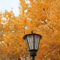 Осень Байконура.... :: Наталья Булдакова